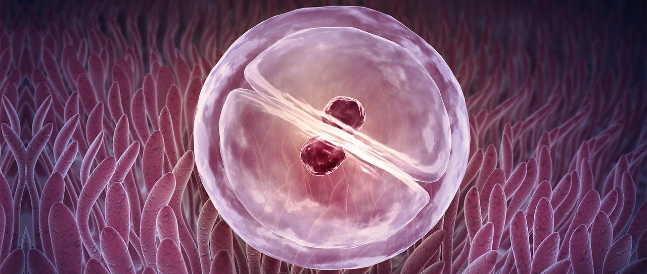 Яйцеклетки и энергетическая работа с ними