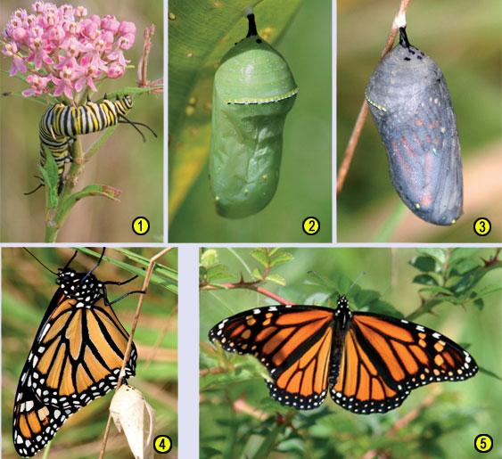 Необъяснимый метаморфоз насекомых