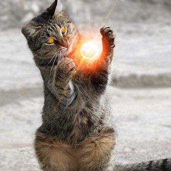 Магия кошек и их другие способности
