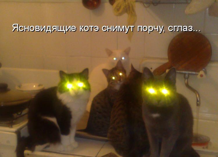 ясновидящие Кошки