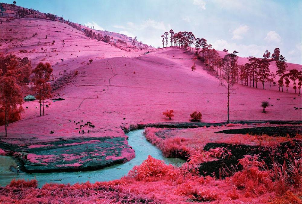 Розовый Тиамат, как надоедает гармония и почему информация может быть противоречивой