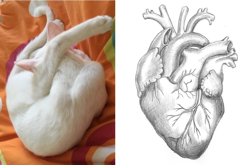 Магия кошек и способность чистить негатив