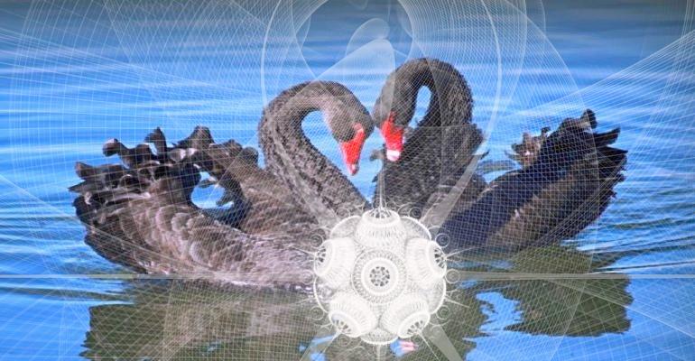 Коронавирус и черные лебеди